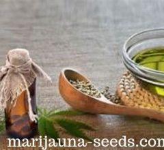 starting cannabis seeds