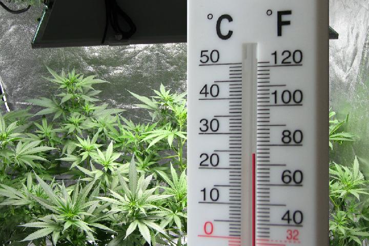 humidity level for marijuana plant